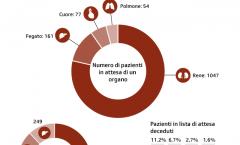 transplantation-ita-png-data